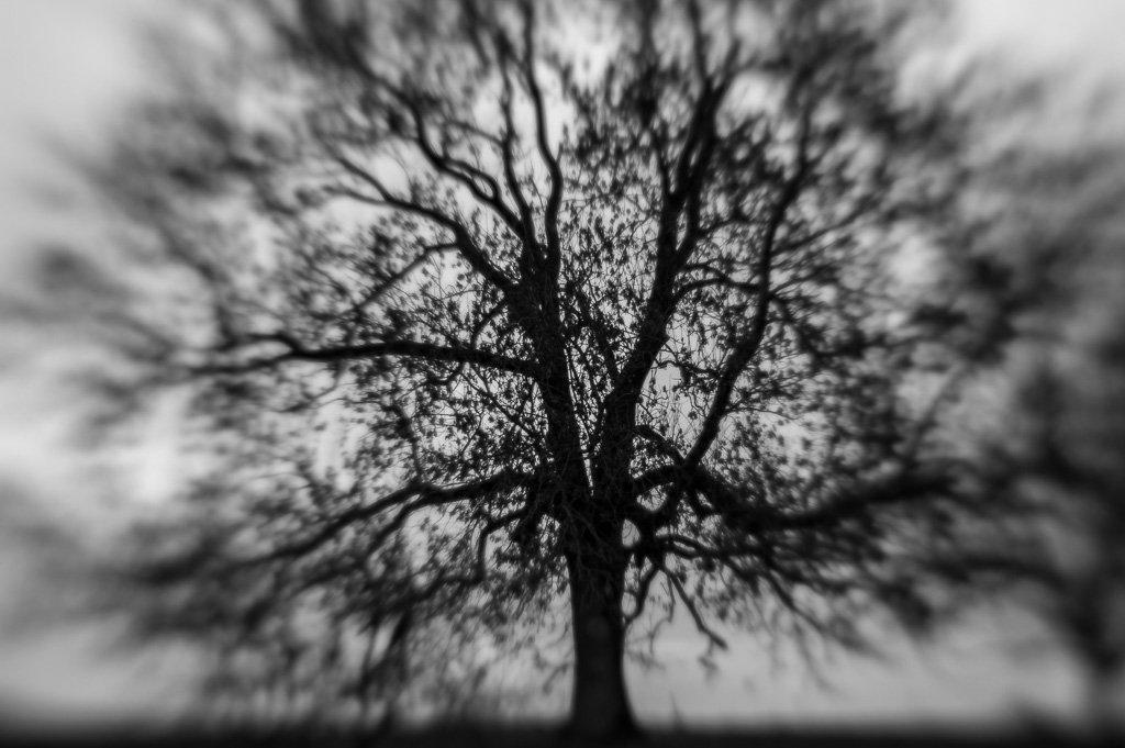 Nur ein Baum - Single Glass mit Blende 4
