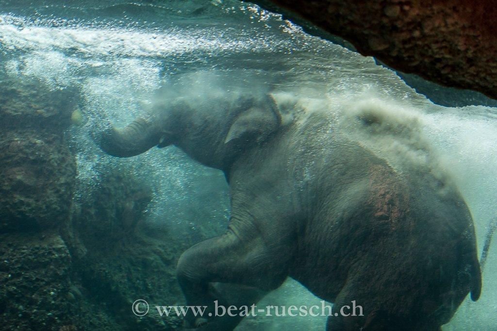Elefant beim täglichen Bad