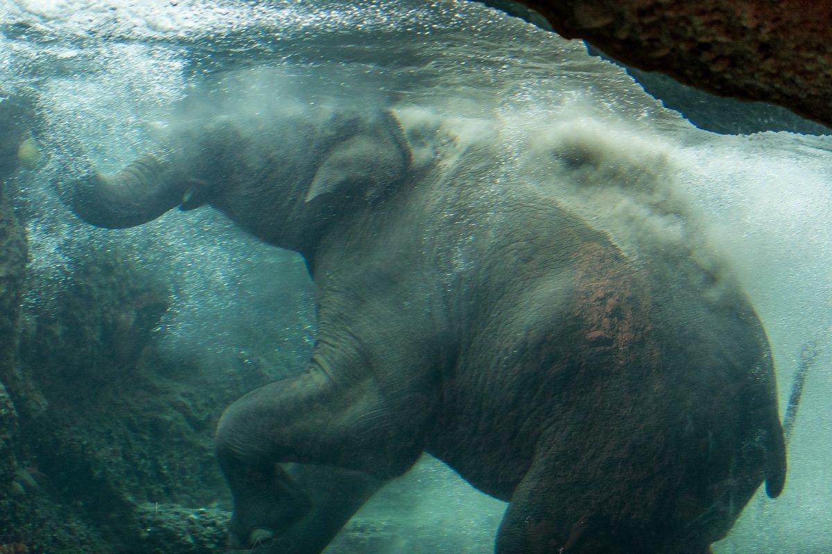 Elefanten Aquarium (Zoo Zürich)