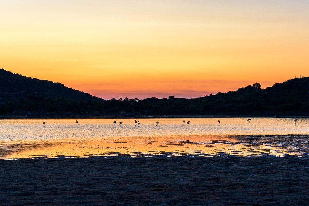 Morgenstimmung in der Lagune bei Chia