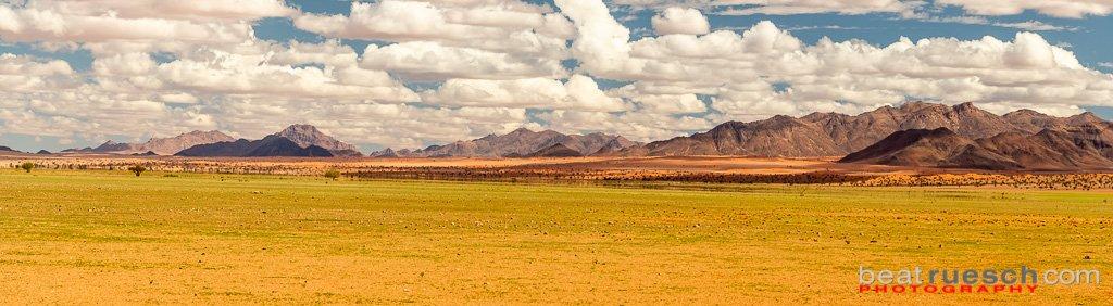 ... die Wüste wird grün