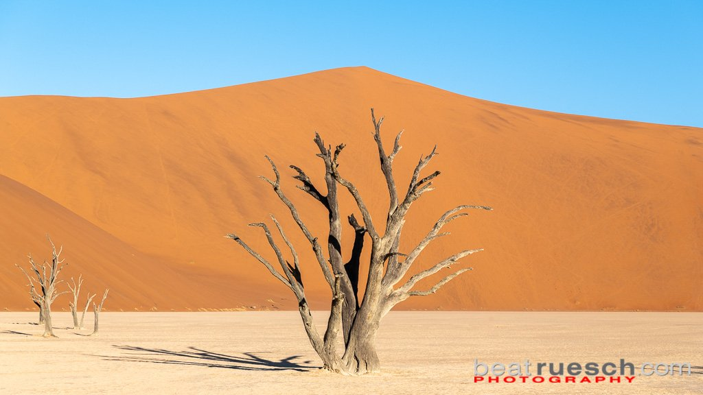 Abgestorbene Akazienbäume im Deadvlei