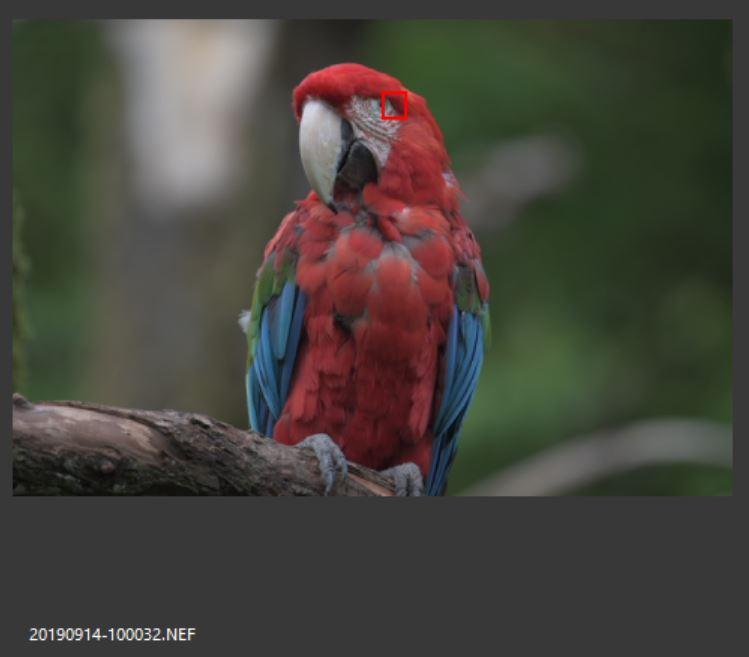 Screenshot aus ViewNX - Schärfe fast auf dem Auge
