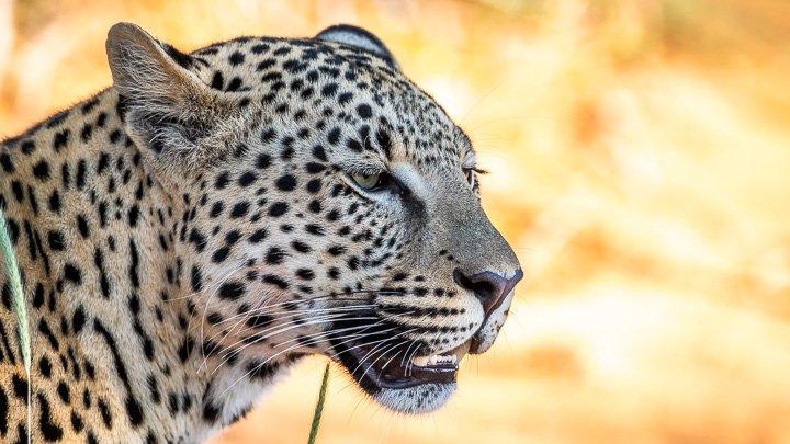 Fotoreise Namibia 2018 - Tiere