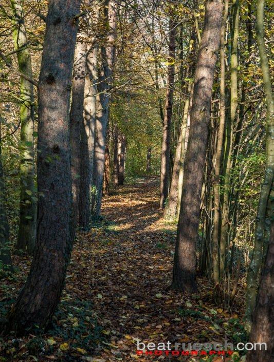 Waldweg beim Weiher